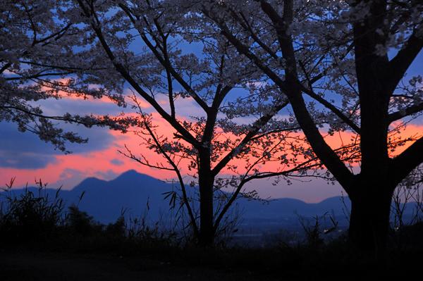 http://www.lint.ne.jp/nomoto/PHOTOSALON/yamatoji/yamatoji_6sakura/070404sakurabokei_yamanobe_600.jpg